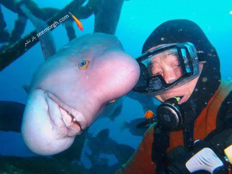 25 سال رابطه عاشقانه ماهی غول پیکر با یک مرد! عکس